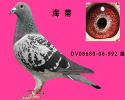 DV06860-06-992