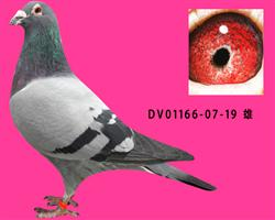 DV01166-07-19
