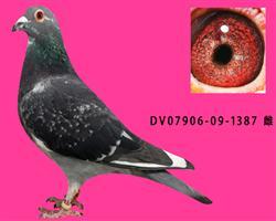 DV07906-09-1387