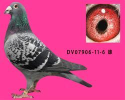 DV07906-11-6