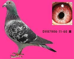 DV07906-11-60