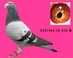 DV07906-06-656
