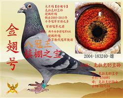 金翅号【2004-183240】