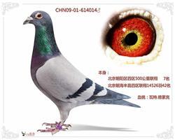 北京四区联翔7名