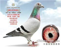 北京亿丰万豪三关鸽王4位