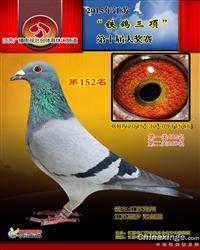 冠军巴龙   雄  0931546-15