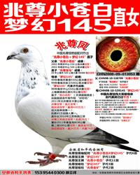 苍白骑士王牌梦幻145直女【兆尊凤】