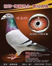 利奥515(003直孙)