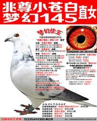 苍白骑士王牌梦幻145直女【梦幻佳玉】