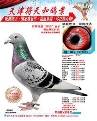 世界铭鸽【伊万号】直子 003