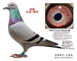 凡龙X胡本536