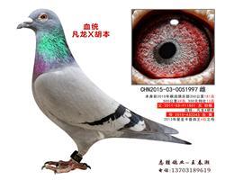 凡龙X胡本997