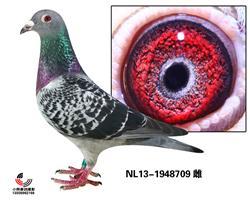 NL13-1948709