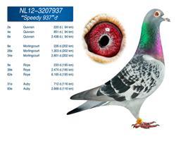 维姆.布莱曼-冠军联盟,成绩鸽展卖。