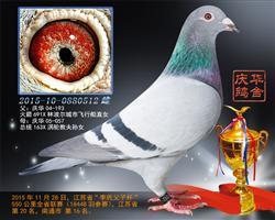 2015江�K省李氏杯550公里��20名