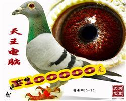天王电脑   雄   特号005-15