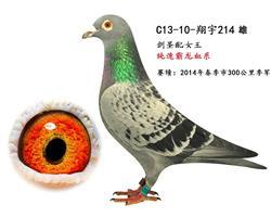 翔宇214