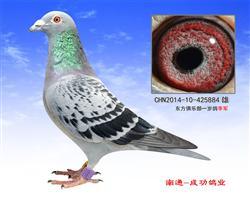 江苏南通成功鸽业