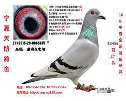 汾阳联赛13456羽27名(售永宁)