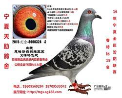 16年全区汾阳联赛春比19名(售同心)