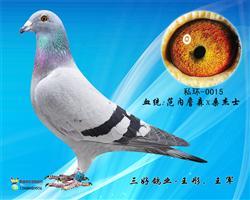 三好鸽业-超级种雌0015