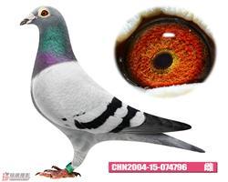 CHN2004-15-074796