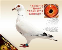 """【白玉女王】""""苍白骑士""""回血孙女!"""