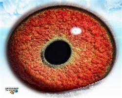 0321100的眼睛