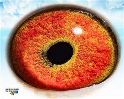 0099313的眼睛