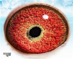 0095161的眼睛