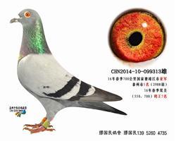杨龚多拉斯313