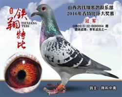 2016年山西春铁翔俱乐部特比环决赛冠军