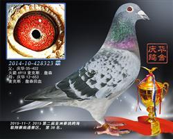 第二届亚洲赛鸽跨海联翔赛南通赛区38名