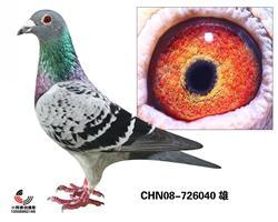 台湾明月詹森695血系