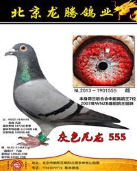 灰色凡龙555