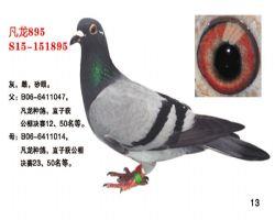 凡龙895