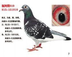 杨阿腾910