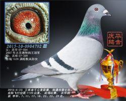 2016江苏省千公里联赛南通市第七名