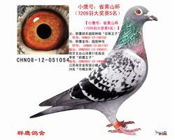 小鹰号:省黄山杯(7209羽大奖赛5名)