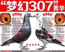 """苍白骑士王牌""""梦幻307""""组合"""