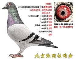 北京卓越星公棚决赛冠军