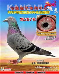2016年安徽康华赛鸽中心决赛287名