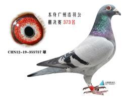 2012年广东浩羽公棚决赛373名