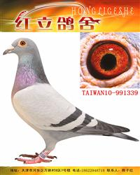 台湾硕圆鸽舍