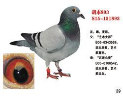 胡本893