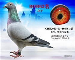 BOB62名之子