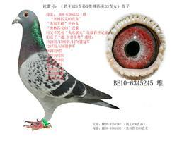 (速雷号):(鸽王426)近亲