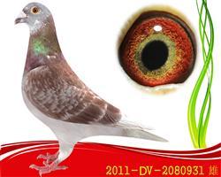 已售2011-DV-2080931