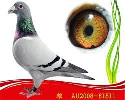 已售2008-AU-61811