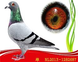 已售NL-2013-1282687